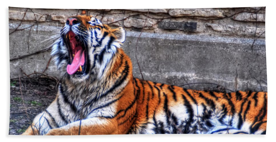 Animals Beach Towel featuring the photograph Siberian Tiger Nap Time by Michael Frank Jr