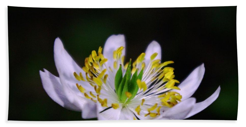 Flowers Beach Towel featuring the photograph Side View Of A Tiny Paradise by Jeff Swan