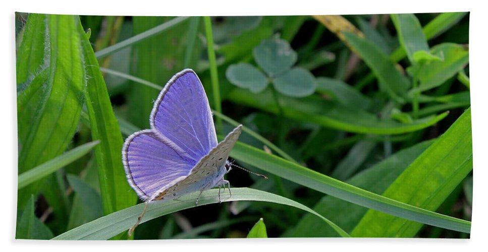 Silver Studded Blue Butterfly Beach Towel featuring the photograph Silver Studded Blue Butterfly by Tony Murtagh