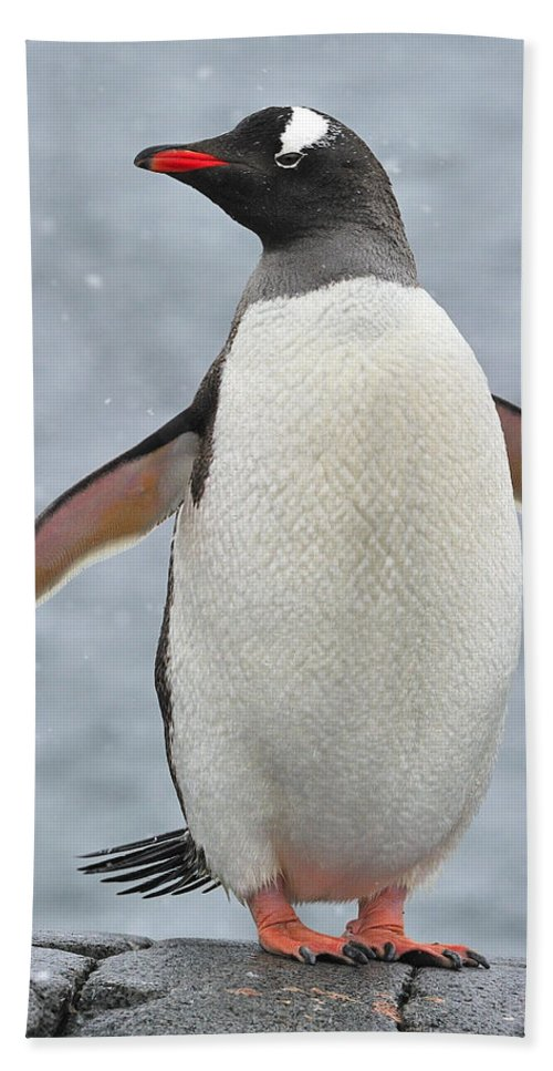 Gentoo Penguin Beach Towel featuring the photograph Simply Gentoo by Tony Beck