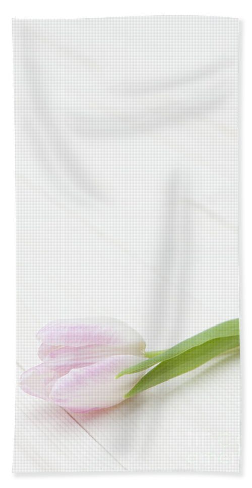 Art Beach Towel featuring the photograph Simply Tulip by Anne Gilbert