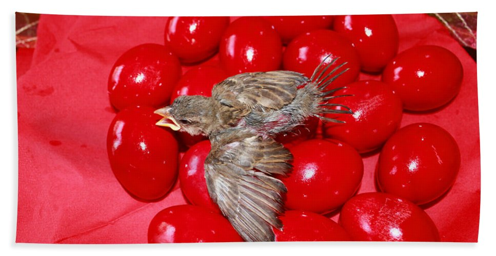 Augusta Stylianou Beach Towel featuring the photograph Singing Over Red Eggs by Augusta Stylianou