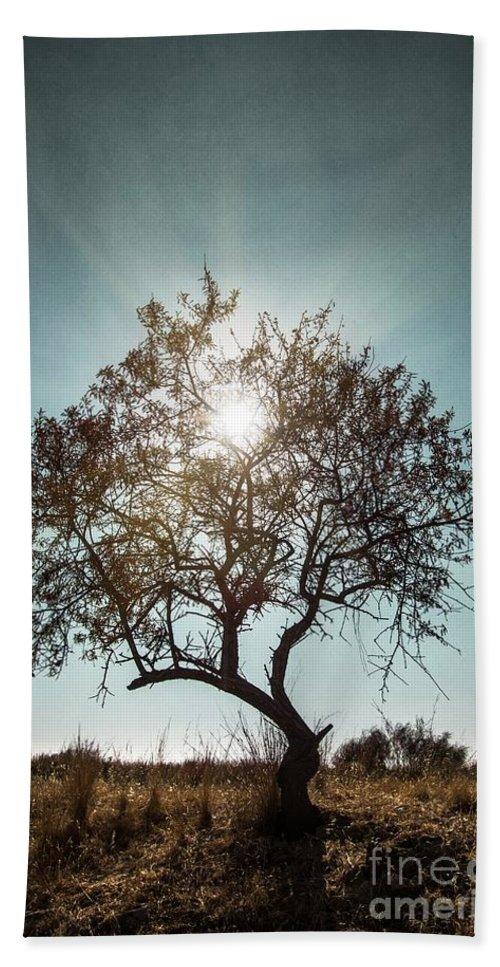 Dark Beach Towel featuring the photograph Single Tree by Carlos Caetano