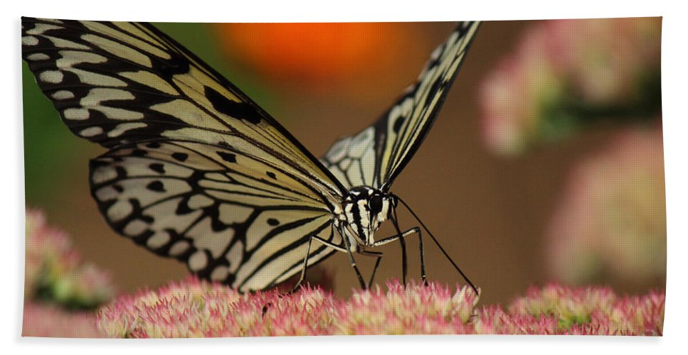 Butterfly Beach Towel featuring the photograph Sip Of The Nectar by Randy Hall