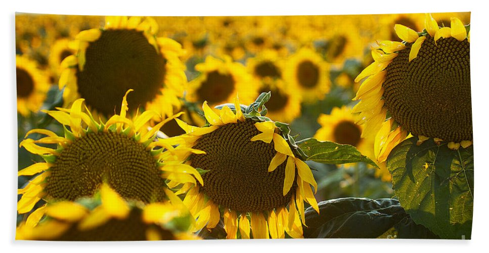 Flowers Beach Towel featuring the photograph Sisters by Jim Garrison