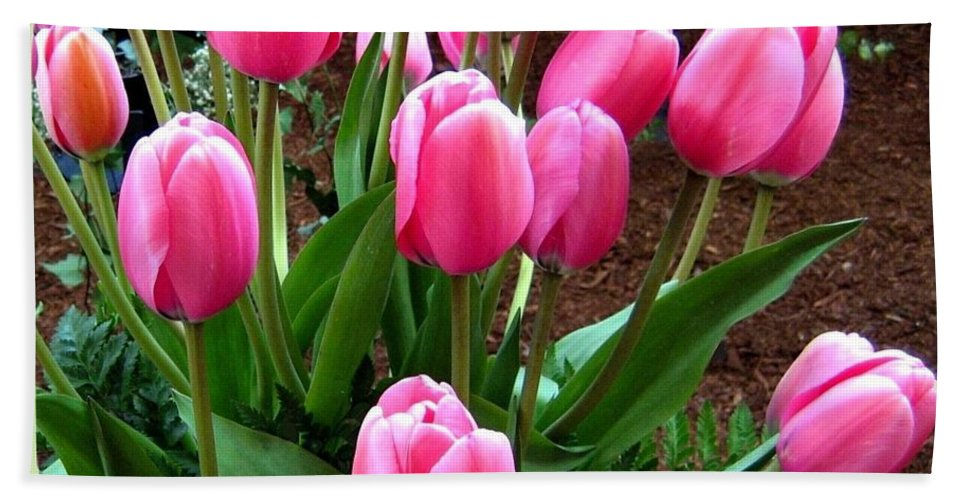 Tulips Beach Towel featuring the photograph Skagit Valley Tulips 9 by Will Borden