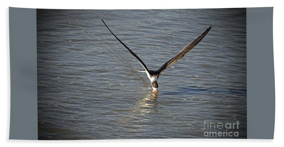 Beach Towel featuring the photograph Skimmer Fishing by TJ Baccari