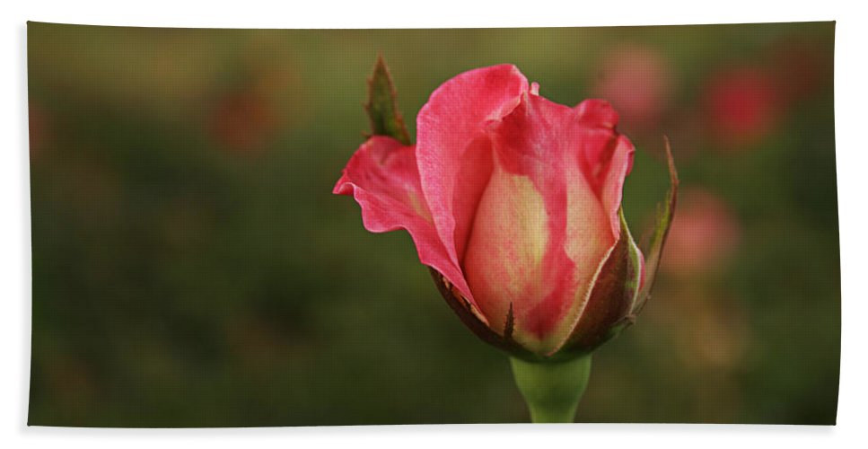 Bud Beach Towel featuring the photograph Skc 0422 Blossoming Bud by Sunil Kapadia