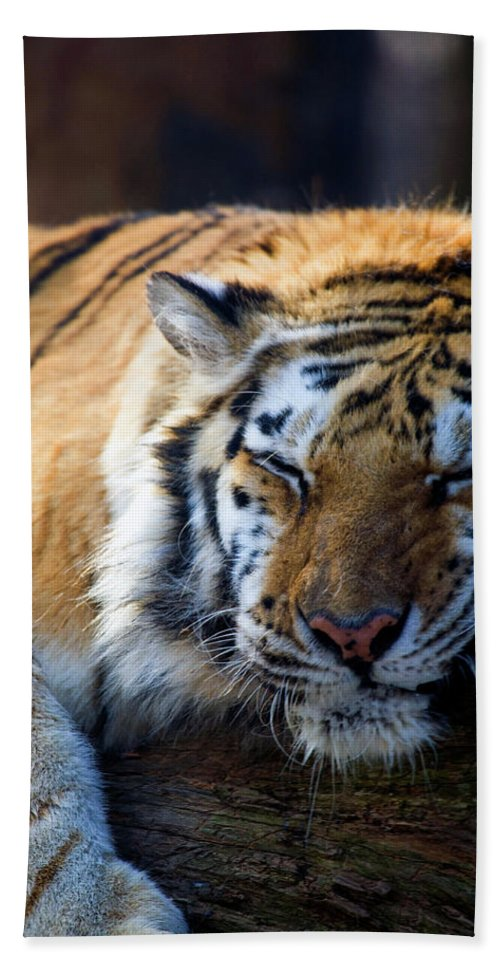 Tiger Beach Towel featuring the photograph Sleeping Beauty by Karol Livote