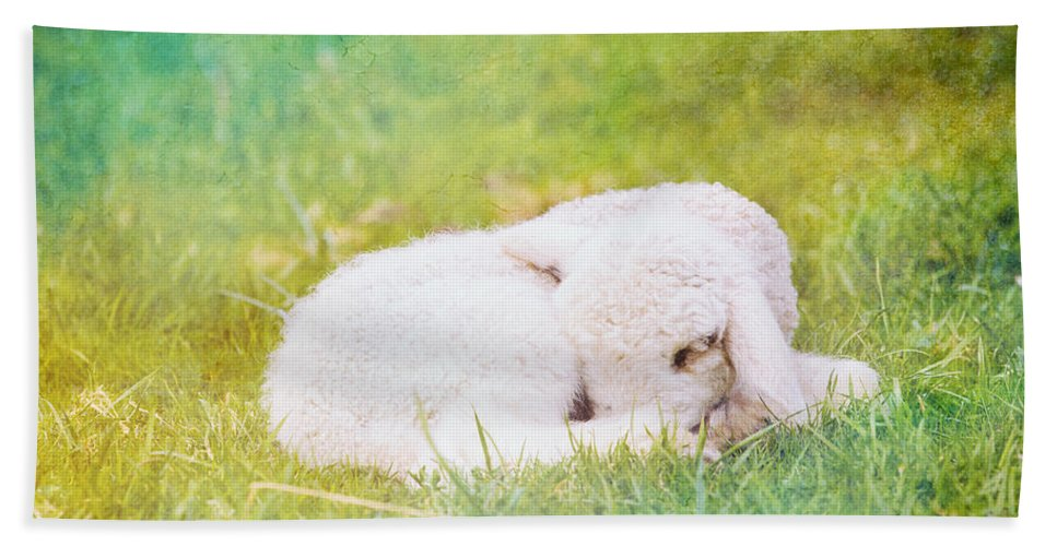 Texture Beach Towel featuring the photograph Sleeping Lamb Green Hue by Pati Photography