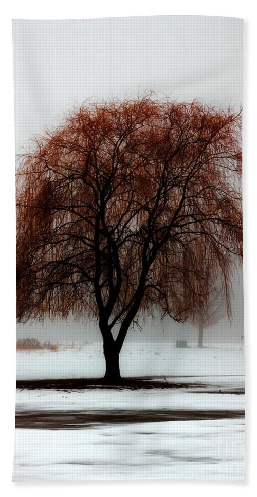 Weeping Willow Beach Towel featuring the photograph Sleeping Willow by Rick Kuperberg Sr
