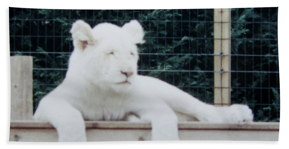 Lion Beach Towel featuring the photograph Sleepy by Donna Brown