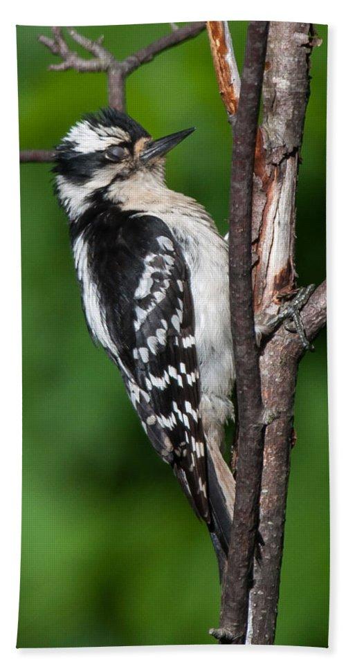 Bird Beach Towel featuring the photograph Sleepy Woodpecker by Richard Kitchen