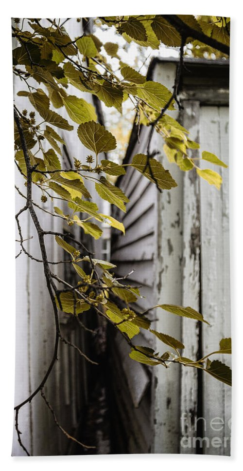 Tree Beach Towel featuring the photograph Sliver by Margie Hurwich