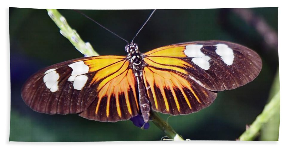 Butterfly Beach Towel featuring the photograph Small Postman Butterfly by Jenny Hudson