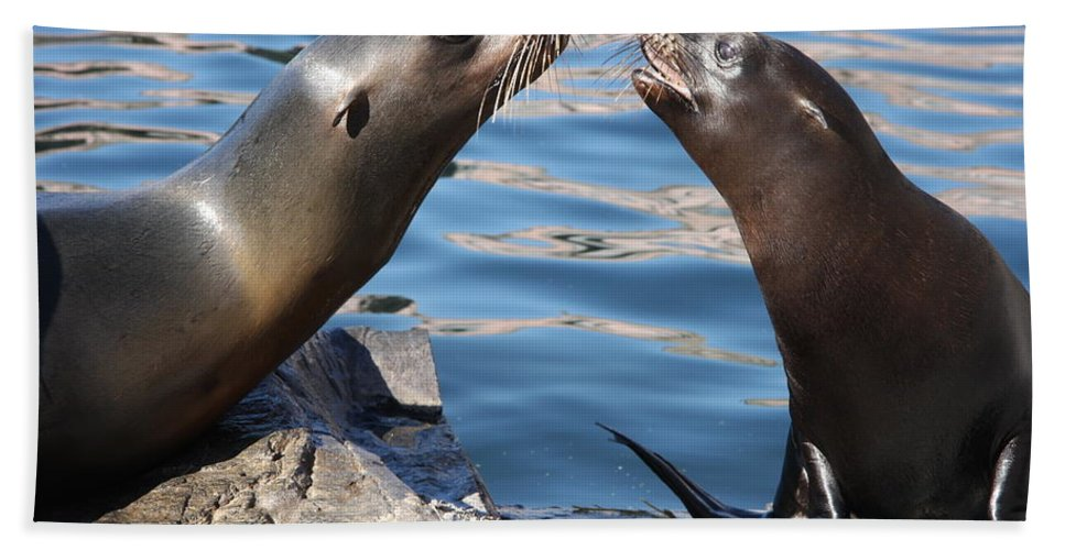 Seals Beach Towel featuring the photograph Small Talk by Christiane Schulze Art And Photography