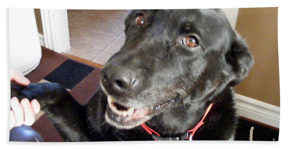 Black Lab Beach Towel featuring the photograph Smile For The Camera by Barbara Griffin