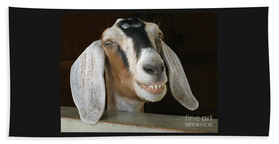 Goat Beach Sheet featuring the photograph Smile Pretty by Ann Horn