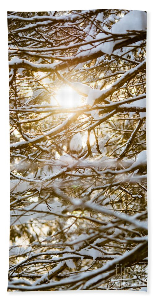 Beach Towel featuring the photograph Snow Covered Branches by Cheryl Baxter