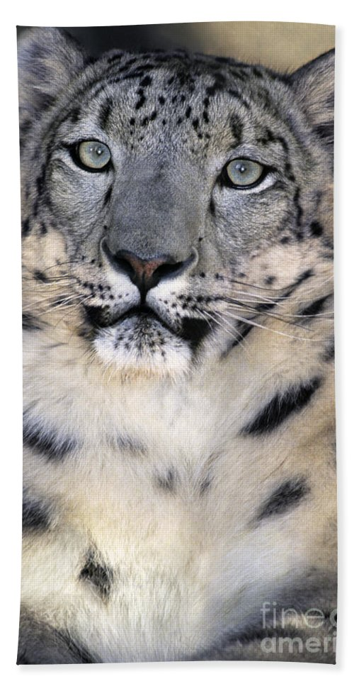 Snow Leopard Beach Towel featuring the photograph Snow Leopard Portrait Endangered Species Wildlife Rescue by Dave Welling