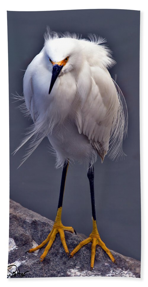 Snowy Egret Beach Towel featuring the photograph Snowy Egret by David Salter