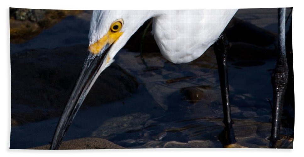 Snowy Beach Towel featuring the photograph Snowy Egret Dribble by John Daly