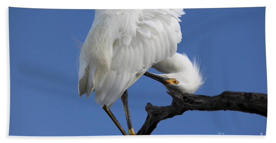 Snowy Egret Beach Towel featuring the photograph Snowy Egret Photograph by Meg Rousher