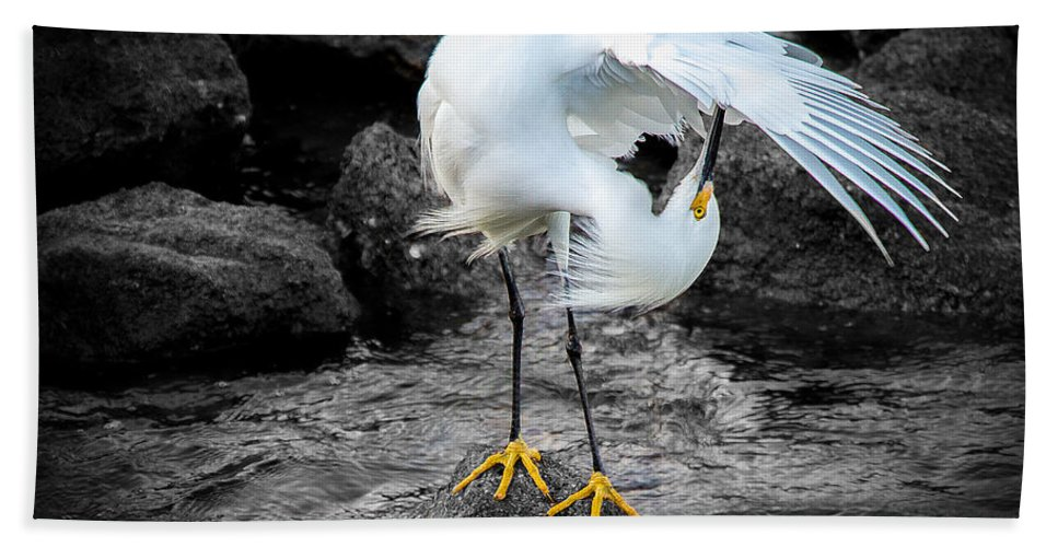 St Augustine Beach Sheet featuring the photograph Snowy Egret by Shannon Tibbetts