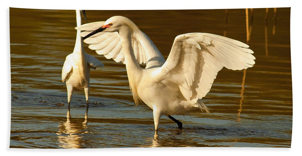 Nature Beach Towel featuring the photograph Snowy Egret Wingspan by Robert Frederick