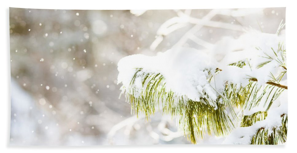 Beach Towel featuring the photograph Snowy Evergreen by Cheryl Baxter
