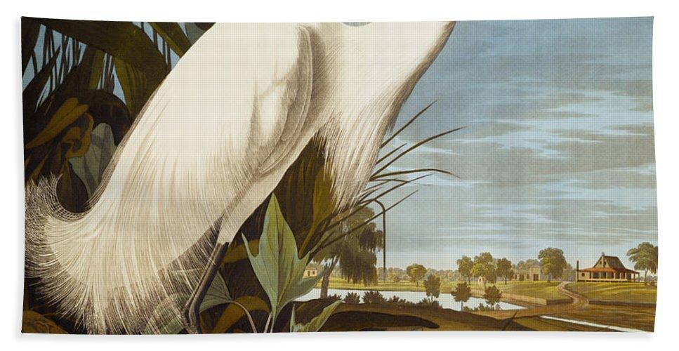 Bird Beach Towel featuring the painting Snowy Heron Or White Egret by John James Audubon