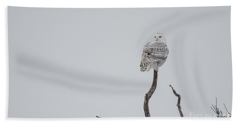 Field Beach Towel featuring the photograph Snowy Hunting by Cheryl Baxter