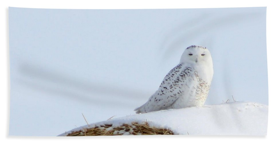 Alyce Taylor Beach Towel featuring the photograph Snowy Owl by Alyce Taylor