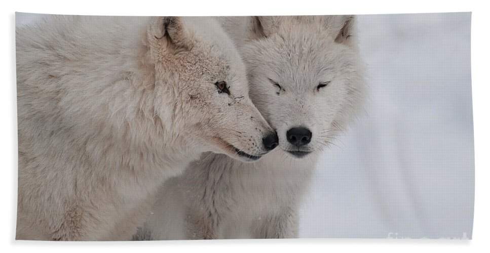 Arctic Wolf Beach Towel featuring the photograph Snuggle Buddies by Bianca Nadeau
