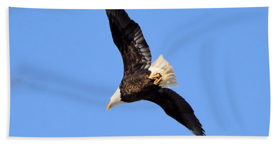 Bald Eagle Beach Towel featuring the photograph Soaring Eagle by Bonfire Photography