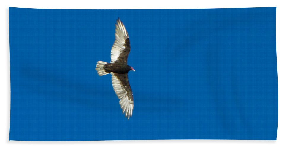 Bird Beach Towel featuring the photograph Soaring by Omaste Witkowski