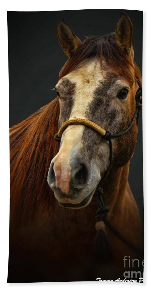 Horse Beach Towel featuring the photograph Soft Focus Horse by Tommy Anderson