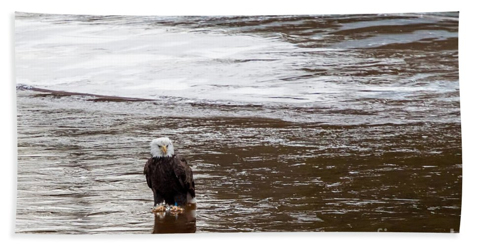 Birds Beach Towel featuring the photograph Solitary Eagle by Eleanor Abramson