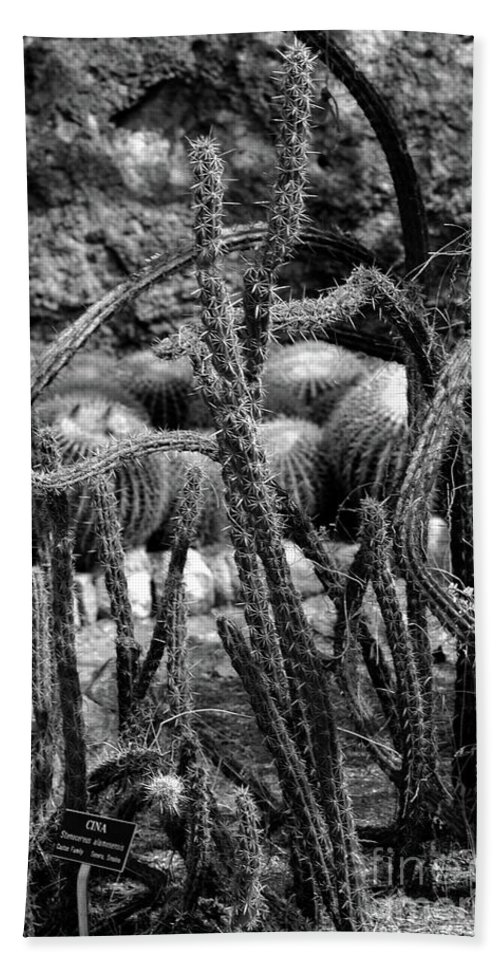 #cactus #boyce # Beach Towel featuring the photograph Something Wild by Kathleen Struckle