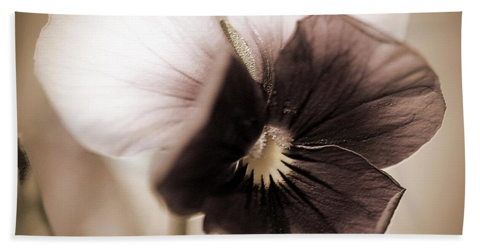 Mccombie Beach Towel featuring the photograph Sorbet Viola by J McCombie