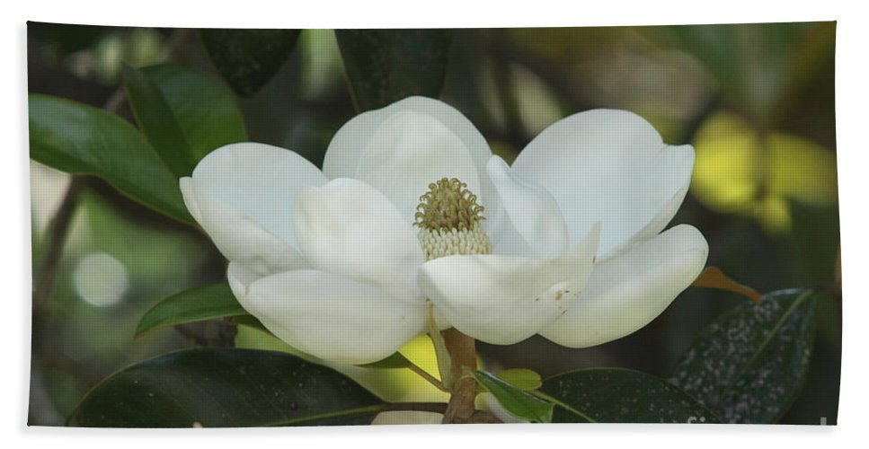 Magnolia Beach Towel featuring the photograph Southern Belle by Christiane Schulze Art And Photography