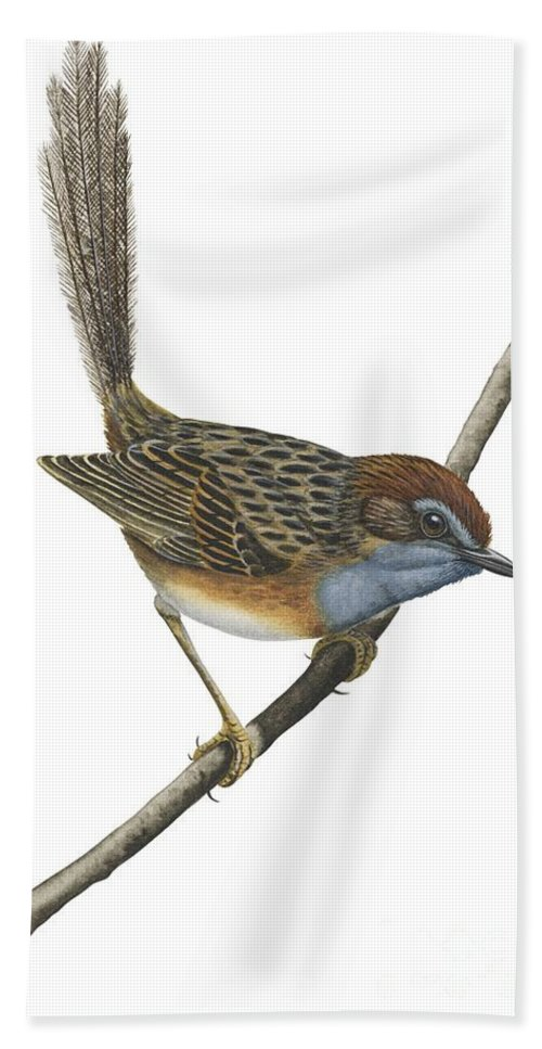 No People; Vertical; Full Length; White Background; One Animal; Animal Themes; Illustration And Painting; Southern Emu-wren; Branch; Perching; Bird; Stipiturus Malachurus Beach Towel featuring the drawing Southern Emu Wren by Anonymous