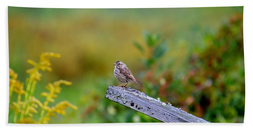 Sparrow Beach Towel featuring the photograph Sparrow On Board by Thomas Phillips