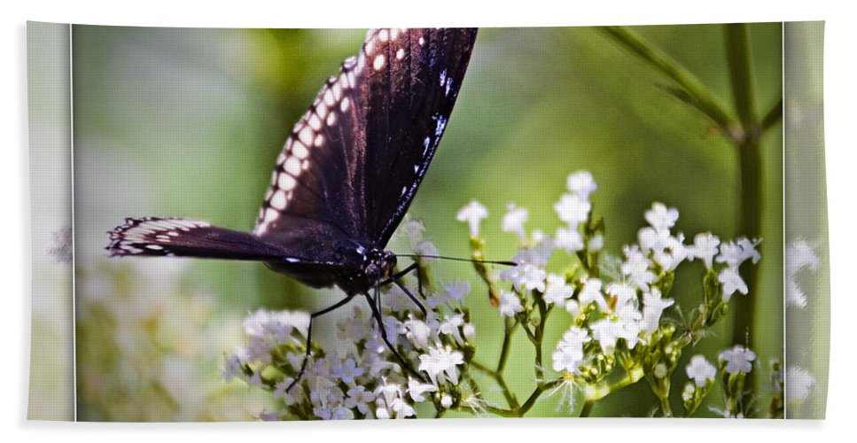 Spicebrush Swallowtail Butterfly Beach Towel featuring the photograph Spicebrush Swallowtail Butterfly by Walter Herrit