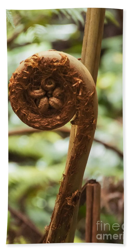 Kilauea Iki Crater Trail And Overlook Hawaii Volcano National Park Parks Spiral Tree Fern Ferns Plant Plants Beach Towel featuring the photograph Spiral Tree Fern by Bob Phillips