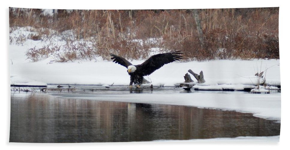 Bald Eagle Beach Towel featuring the photograph Splash 4 by Thomas Phillips
