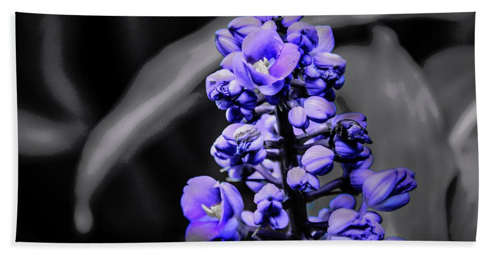 Monochrome Beach Towel featuring the photograph Spring Bloom by Kip Krause