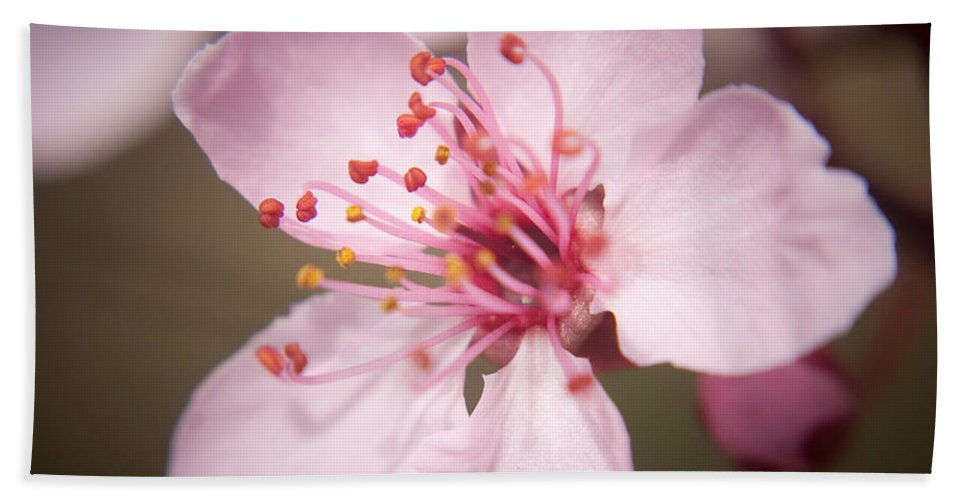 Flowers Beach Towel featuring the photograph Spring Blooms 6697 by Timothy Bischoff