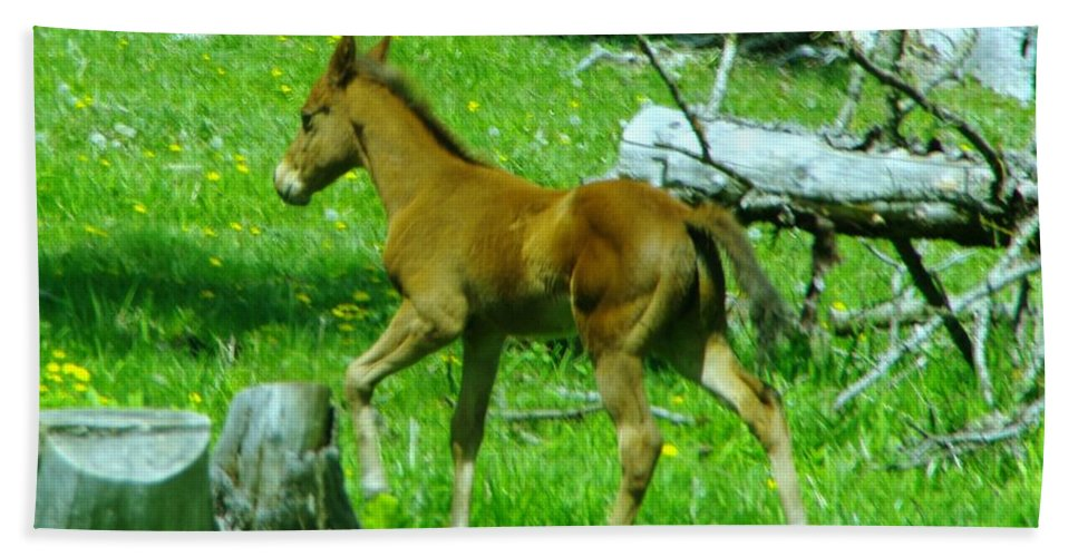 Baby Colts Beach Towel featuring the photograph Spring Colt by Jeff Swan