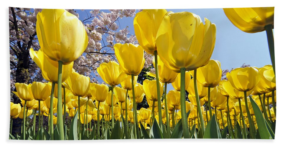 Colourful Beach Towel featuring the photograph Spring Flowers 10 by Arterra Picture Library